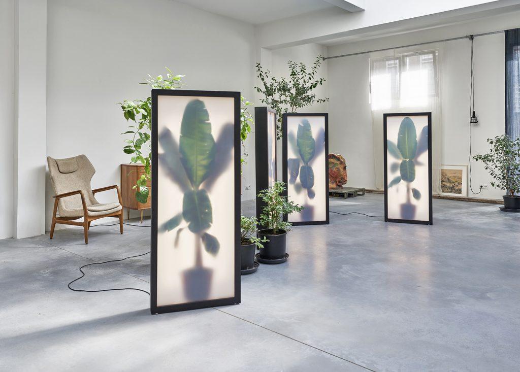 Rem Atelier Growing Plants Indoors Dutch Design Blog