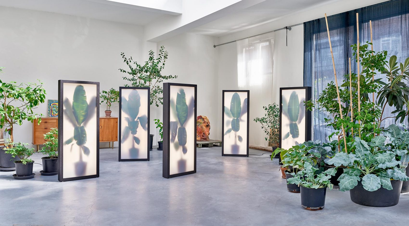 GROWING PLANTS INDOORS BY REM ATELIER